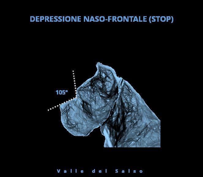 Stop Cane Corso - Allevamento Cane Corso Valle del Salso